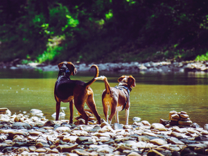 Yes dogs are allowed on the frio river